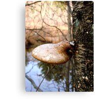 Mushroom Cap Canvas Print