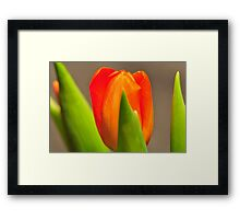 Tulip by Laura lawrence Framed Print