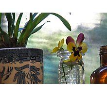 Lauren's sweet little Viola Photographic Print
