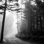 Foggy Mountain Road, wide, b&w by John Attebury