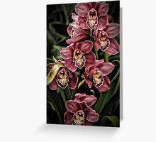 Pink Orchids Greeting Card