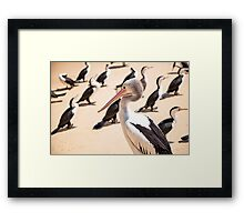 Birds resting on the beach Framed Print