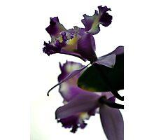 Purple Orchid Photographic Print