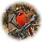 Winter Cardinal by Robin Lee