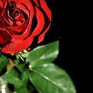 Love Is by Robin Lee