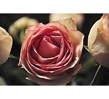 Pink Rose by Laura Lawrence Photographic Print