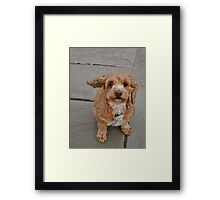 Floppy Ear Framed Print