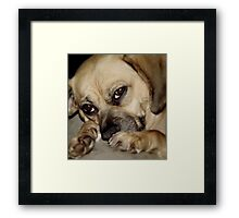 Unconditional  Love! Framed Print