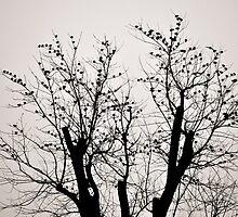 A Lot of Little Birds in a Tree by Ashlee A.