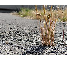 Cracked Grass Photographic Print