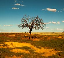 Sparse Tree - Parkes, NSW by Phoebe Kerin
