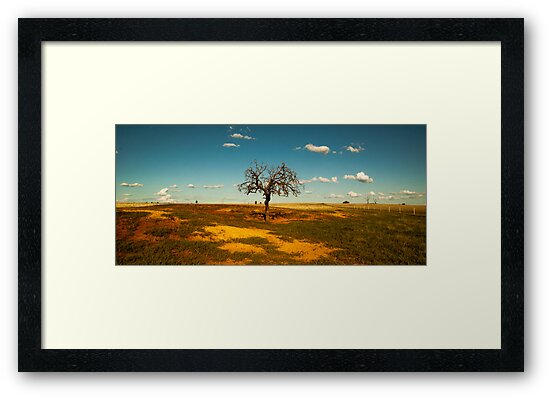 Sparse Tree - Parkes, NSW by Phoebe Kerin