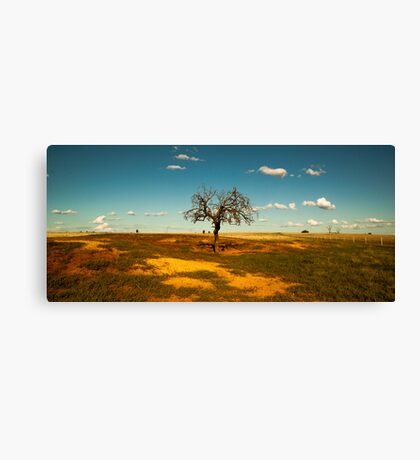 Sparse Tree - Parkes, NSW Canvas Print
