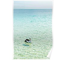 Pelican swimming in the water Poster