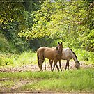 Ross and Locke Horses 3 by Chris Cohen