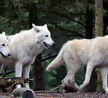 Wolf Pack by sketchpoet