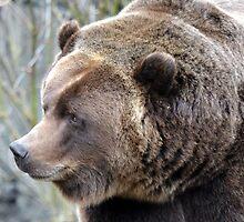 Brown Bear by sketchpoet