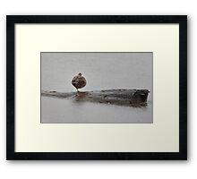 Weather for Ducks Framed Print