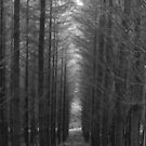 Tall Trees by dopeydi