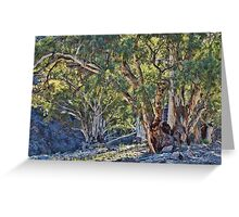 Gums on Oratunga Creek Greeting Card