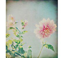 Vintage Flower Photographic Print