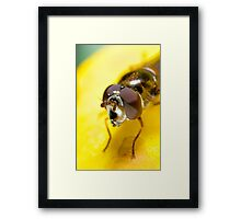 Hoverfly Framed Print