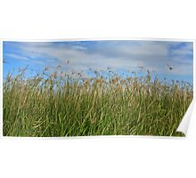 Seedheads in the Breeze Poster