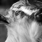 Goat by jainiemac