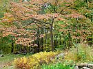 Autumn Paints a Dogwood and Ferns by MotherNature