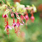 Fairy Things - Fuchsia Flowers by StarFlowerSt