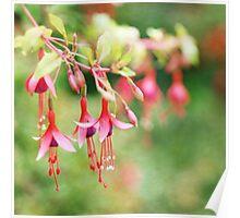 Fairy Things - Fuchsia Flowers Poster