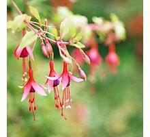 Fairy Things - Fuchsia Flowers Photographic Print