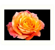 Enticing Beauty The Rose Art Print