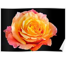 Enticing Beauty The Rose Poster