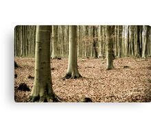 Woodland Serenity  Canvas Print