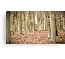 Beautiful Woodland Canvas Print