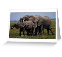 Thirsty Family.- Loxodonta africana( African Bush Elephant) Greeting Card