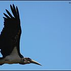 Marabou stalk in flight! by Greg Parfitt