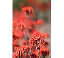 Pink Cactus Flower Photographic Print