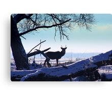 Young Red Deer Stag Canvas Print