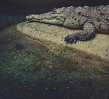 Croc by MonsterBrand