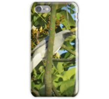 Black Faced Cuckoo Shrike iPhone Case/Skin