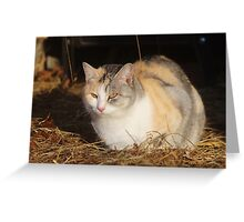 Momma Cat Greeting Card