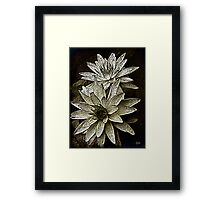 Natures Perfection_2 Framed Print