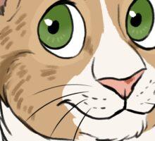 Funny the Cat - Custom Sticker