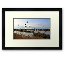 The Ducks Are Safely Home Framed Print