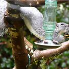 what squirrels will do for food by tego53