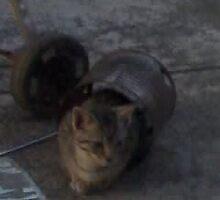 Bucket Cat by budgetnudist