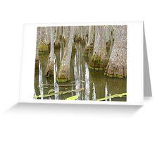 Bizarre Cypress Greeting Card