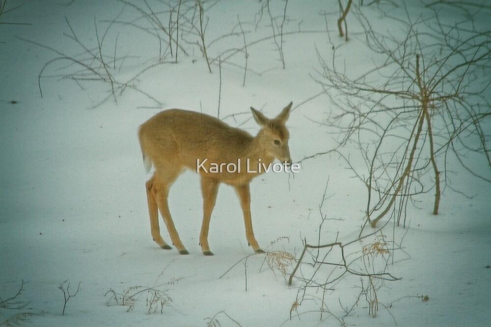 Deer Winter by Karol Livote